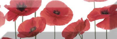 Absolut Keramika Decor Poppy 04 10x30 декор